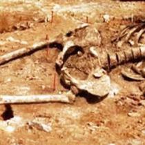 Скелеты гиганты